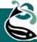 zFin logo